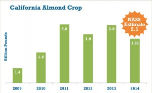 California almond crop